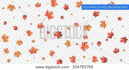 Autumn background design. Autumn falling leaves on transparent background. Vector autumnal foliage fall of maple leaves
