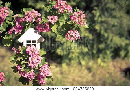 The symbol of the house among the blooming Crataegus Pauls Scarlet