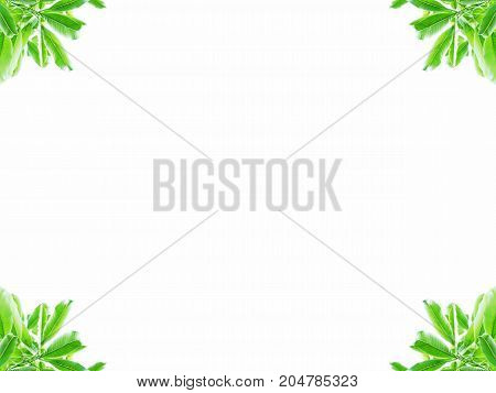 Abstract of seamless green leaves frame at four corners with center copy-space. Use as background, backdrop, frame in natural and environmental friendly concept. Center copy space.