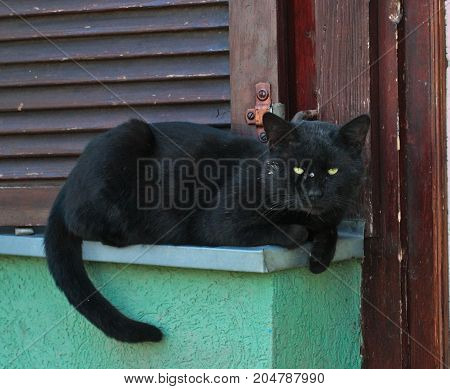 Cat lying on window, waiting for food