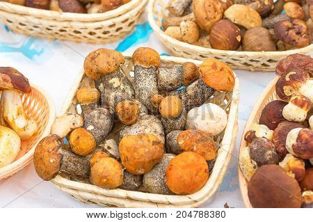Edible mushrooms are found and collected in the forest and lie in a basket