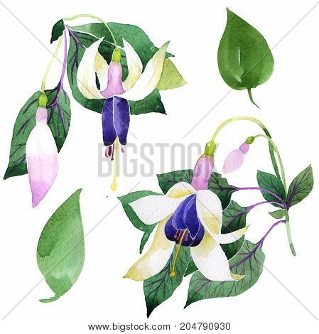 Wildflower fuchsia flower in a watercolor style isolated. Full name of the plant: fuchsia. Aquarelle wild flower for background, texture, wrapper pattern, frame or border.