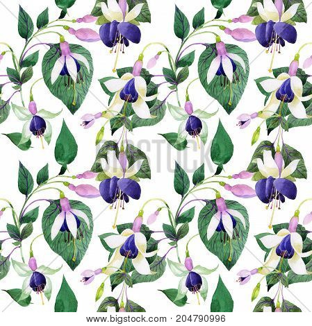 Wildflower fuchsia flower pattern in a watercolor style. Full name of the plant: fuchsia. Aquarelle wild flower for background, texture, wrapper pattern, frame or border.