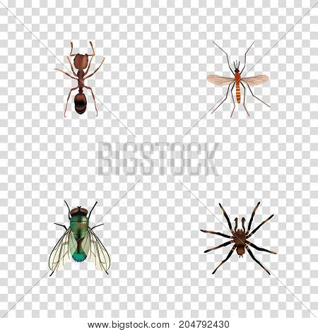 Realistic Emmet, Housefly, Arachnid And Other Vector Elements