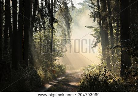 Rural road through the forest on a foggy morning.