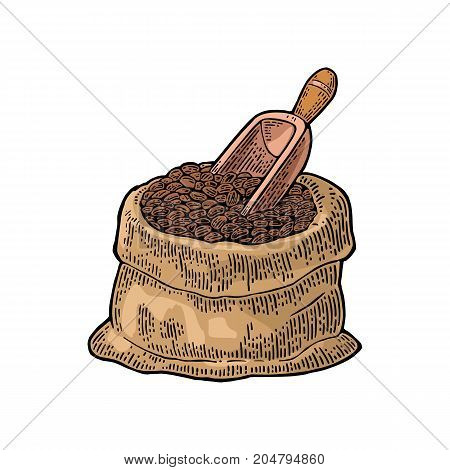 Sack with coffee beans with wooden scoop. Hand drawn sketch style. Vintage color vector engraving illustration for label web flayer. Isolated on white background.