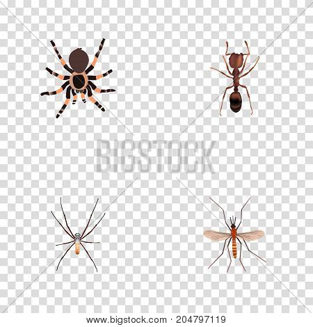 Realistic Emmet, Gnat, Tarantula And Other Vector Elements