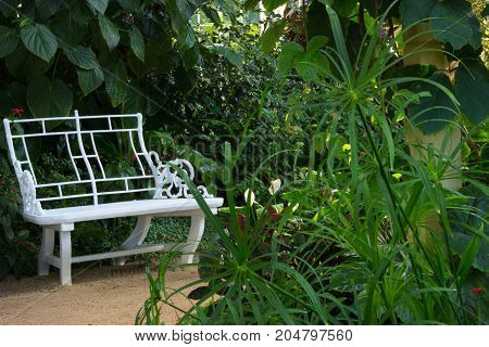 Still life with a bench and tropical flowers and trees. The bench is located on a path leading through the greenhouse.