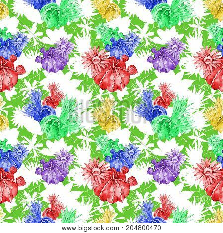 Wildflower cactus flower pattern in a watercolor style. Full name of the plant: mammillaria. Aquarelle wild flower for background, texture, wrapper pattern, frame or border.