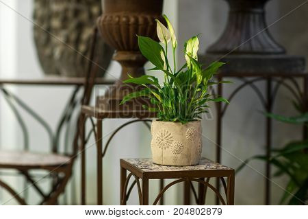 Flowers In A Pot On A Stand