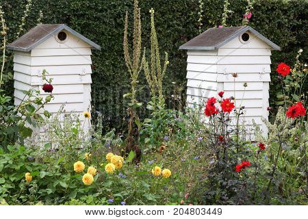 Wooden beehives in a garden in Denmark