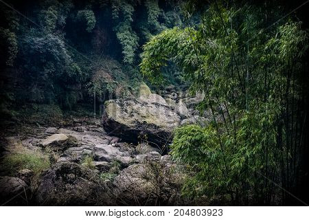 Enchanted forest. Roots, stones in the village. The stones in the forest are covered with moss