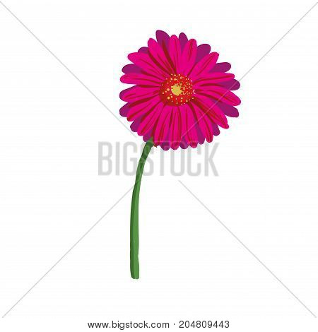 Red flower on white background. Natural elegance illustration design with blooming gerbera stock art