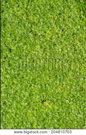 Moss in forest, mossy rain forest, moss on tree, macro moss, green moss background, growing moss, moss and lichen. Soft focus