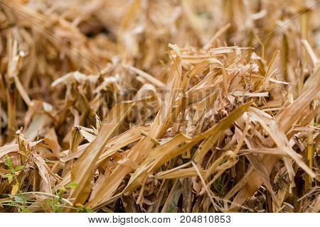 a close up of a freshly harvested corn field
