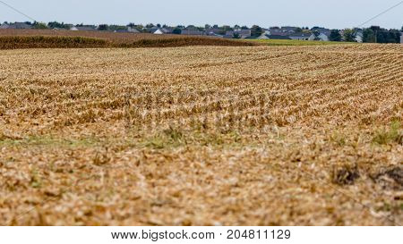 one section of this field has been harvested already