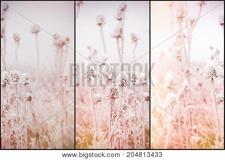 Morning fog and frost in the meadow - hoarfrost on thistle, soft focus on frost thistle, burdock