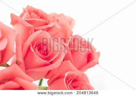 Close-up image of beautiful pink rose flower bouquet isolate on white background with copy space. Valentine day love and wedding concept. Selective and soft focus.