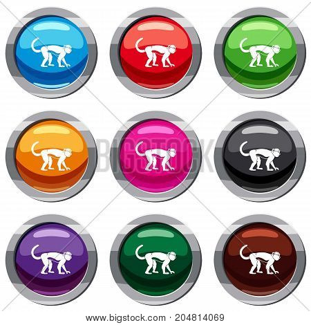 Macaque set icon isolated on white. 9 icon collection vector illustration