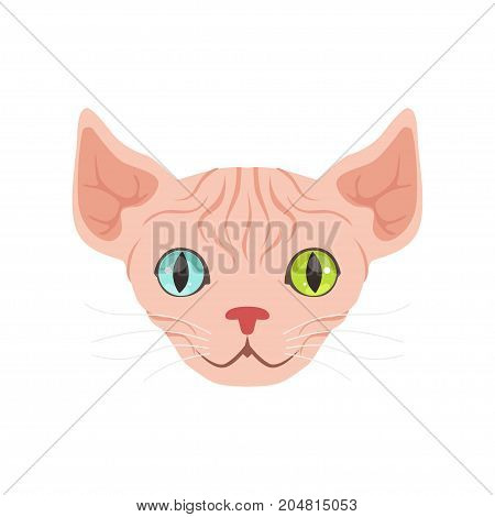 Cute sphinx cat with eyes of different colors, funny cartoon animal character vector illustration isolated on a white background
