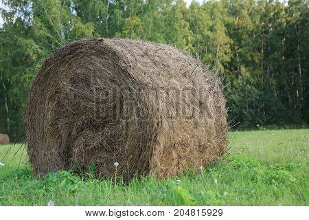 Round bales of hay freshly harvested in a field on a sunny day.