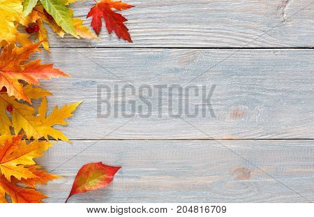 Autumn seasonal background, colorful maple leaves border on gray rustic wood background with copy space.