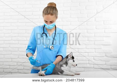 Young professional veterinarian in modern hospital  doing injection with prick to little dog. Doctor in blue uniform holding little puppy husky dog with blue eyes. Vet clinic. Care about pet.