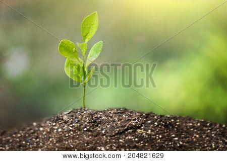 Green sprout growing from seed on gardem, environment concept.