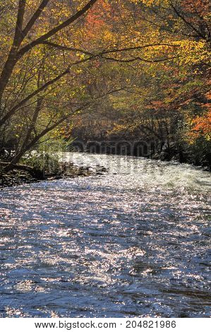 A mountain stream flowwing through the fall forest.