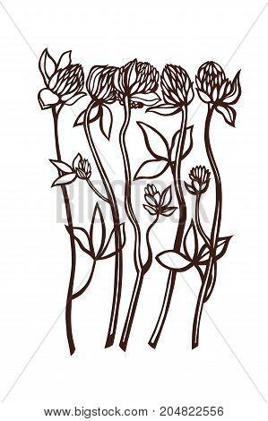 Clover. Trifolium, Fabaceae, Faboideae. Flowers set. Botany. Vector illustration.