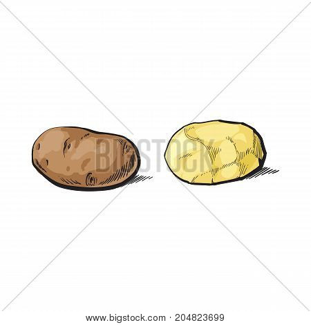 vector sketch cartoon ripe raw unpeeled and peeled yellow potato set. Isolated illustration on a white background. Vegetable fresh natural product, healthy lifestyle, eating concept