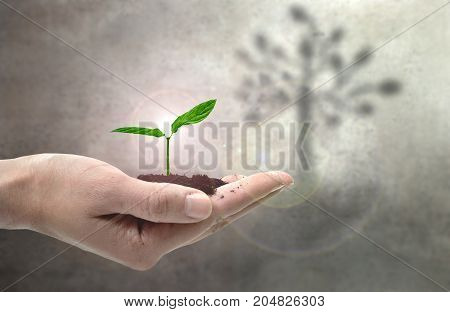 Young plant in a hand with the shadow of a tree