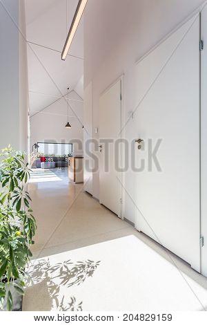 Bright White Corridor With Plant