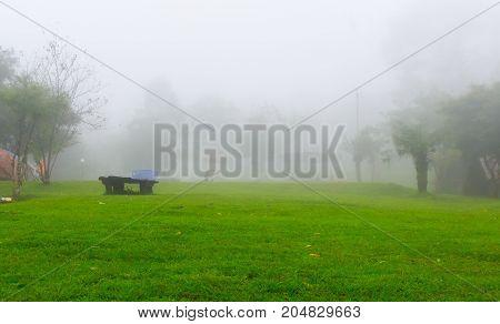 Beautiful natural rain forest, fresh air Rain storm and white mist