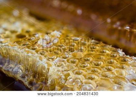 Close view of a piece of honeycomb
