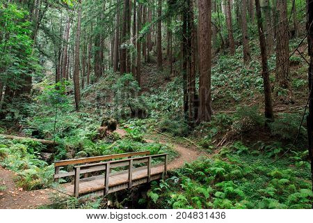 Bridge to Redwood Forest. Purisima Creek Redwoods Open Space Preserve, Woodside, San Mateo County, California, USA.