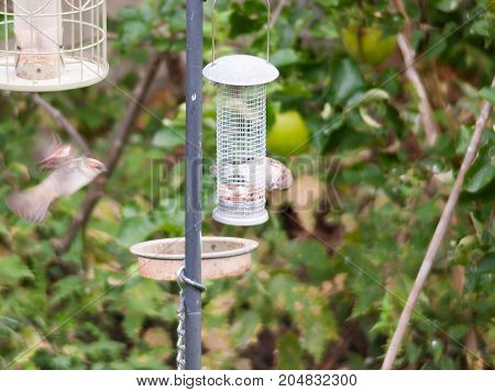 close up of bird feeder in garden with bird eating and bird in motion flying