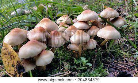 Last sunny summer days. Mushrooms are grown in warm green thick wet moss layer. Perfect weather for outdoor activities.