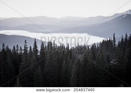 Foggy morning landscape with mountain range and fir forest in hipster vintage retro style