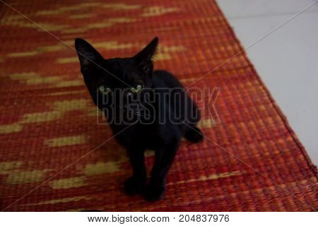 skeptical black cat sitting on red mat