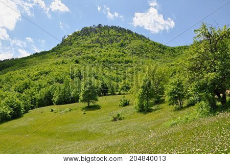 Forest glade in summer at the foot of the mountain, Serbia