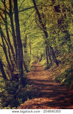 Dark moody forest with path and green trees, natural outdoor vintage background