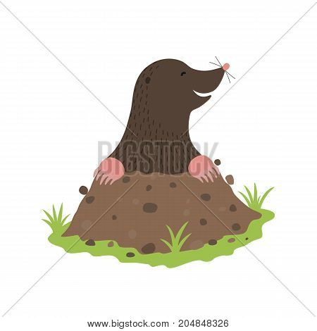 Mole Digging Out of the dirt animal cartoon character isolated on white background.