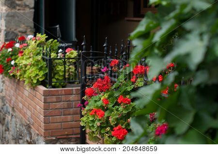 Many red flowers in flowerbed on the street