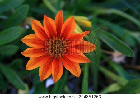 farklı bir rengi ve şekli olan çiçek ve arka planı