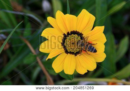 canlı bir çiçek ve üzerinde minik bir arı