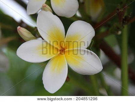 güzel görünümlü bir çiçek ve arka planı