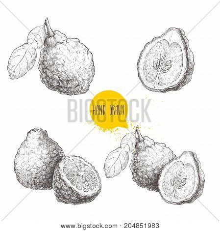 Hand drawn sketch style bergamot fruits set. Kaffir lime whole with leaf and half vector illustration. Organic food. Citrus collection isolated on white background.