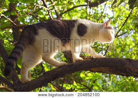 Cat Climb Apple Tree