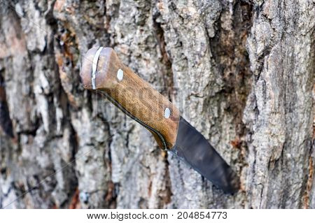 Knife with a wooden handle stuck in the trunk of a tree. poster